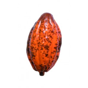 Petit fruit de cacao